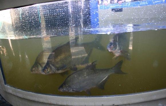 Fischaufstiegsanlage, © Tourist-Information Geesthacht