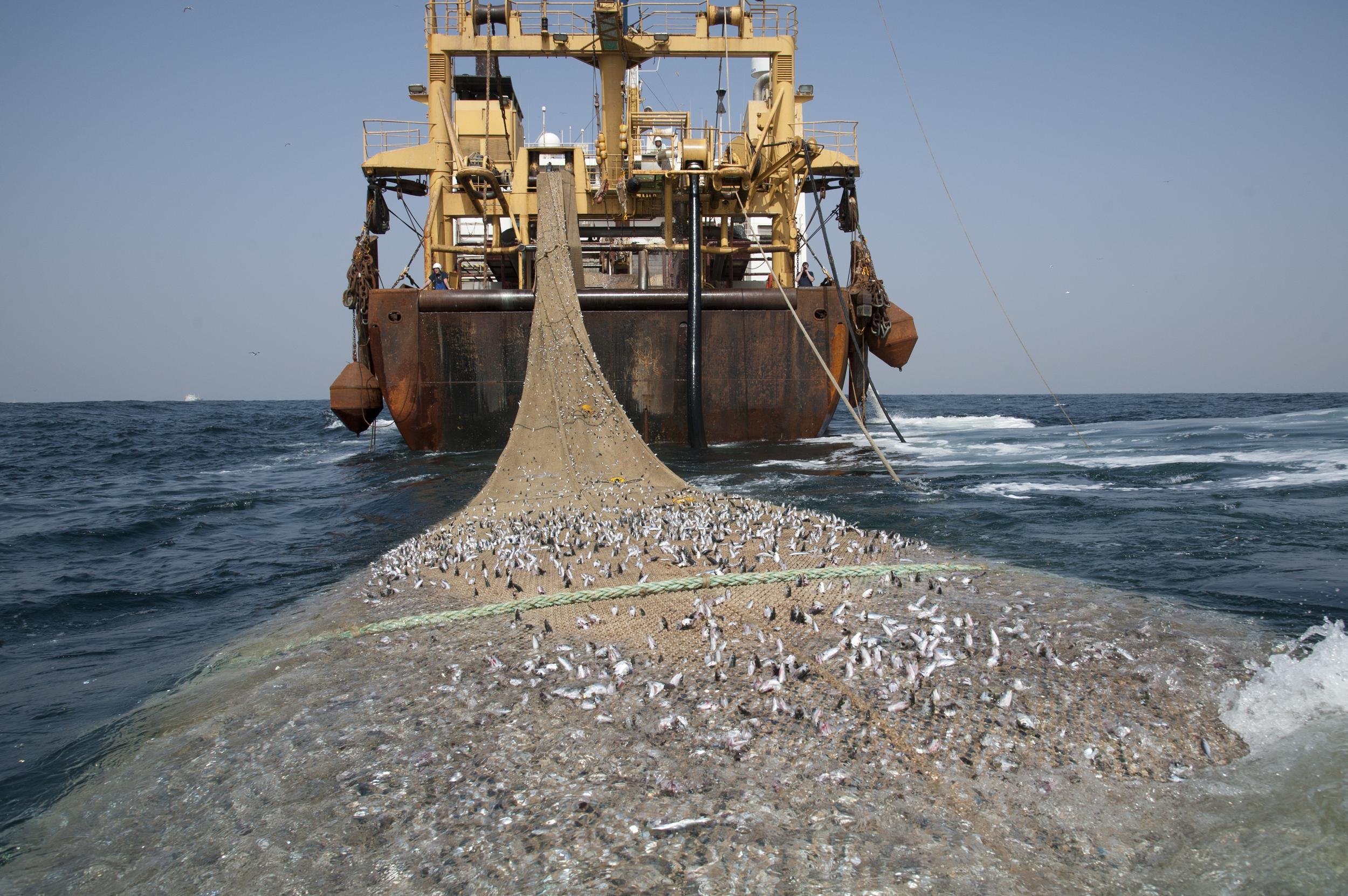 Leere Meere? Weltweite Fischerei und die Folgen