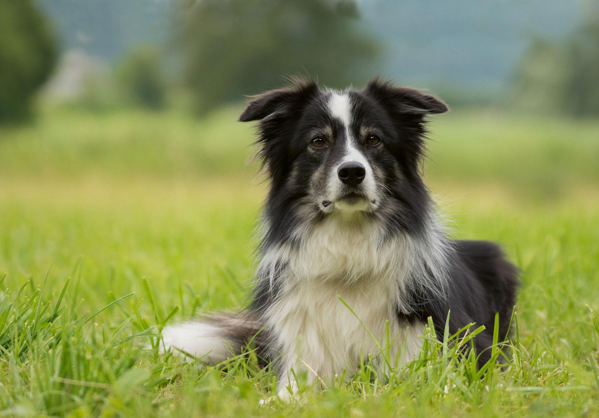 Hundefreizeit