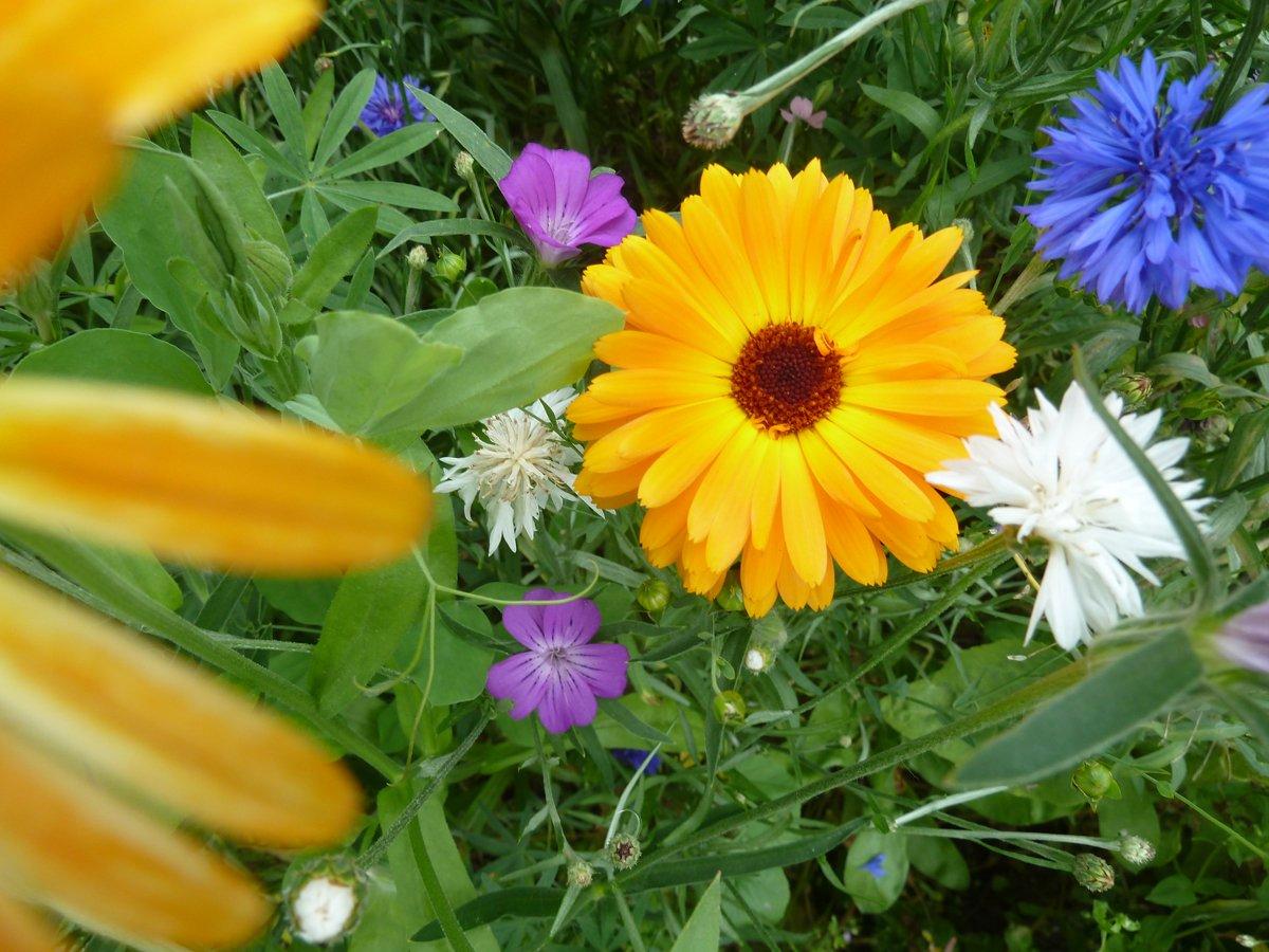 Blumen u. Kräuter
