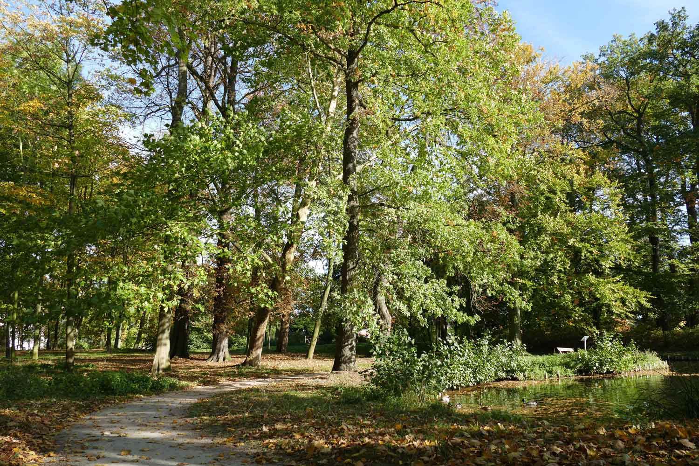 Natur Erlebnis Fuehrung Stadtpark